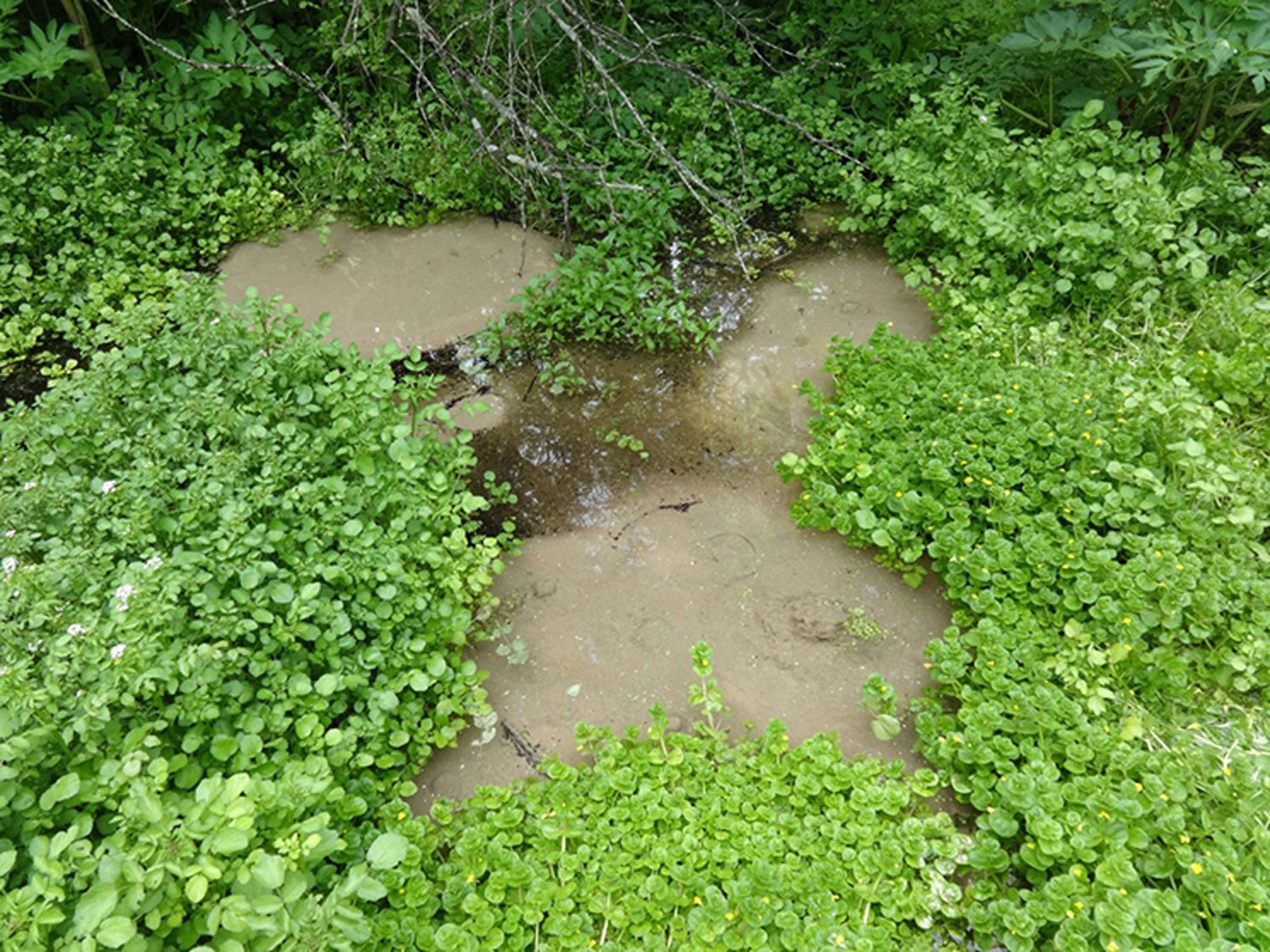 a search for water in the story of a boystrip to the stream Search synonyms stream [streem]  in the sense of running water, however, a stream is a flow that may be as small as a brook or as large as a river: .