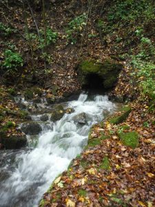 Water pours forth from a small cave.