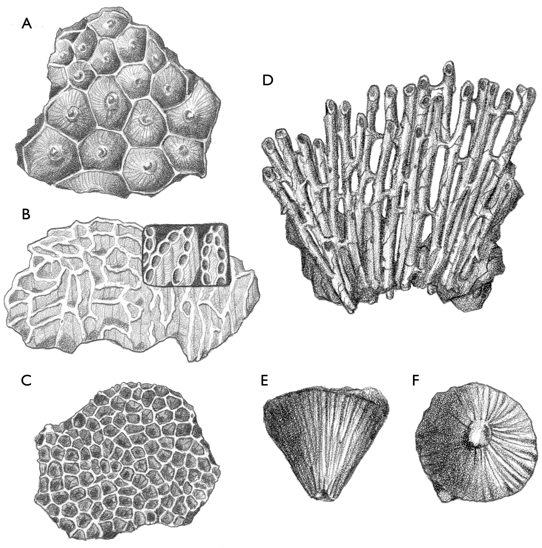 Wisconsin Geological & Natural History Survey » Corals