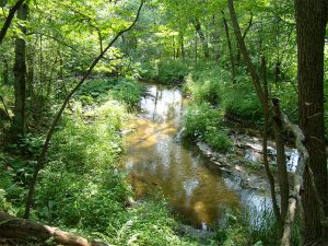The Little Plover River, a class 1 trout stream, winding its way through the woods.