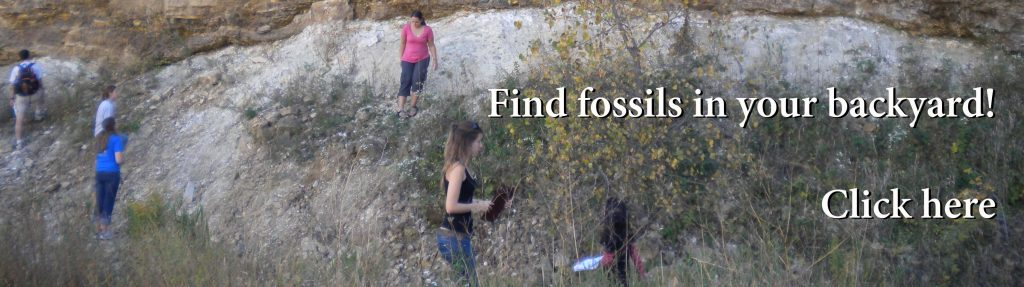finding fossils in wisconsin