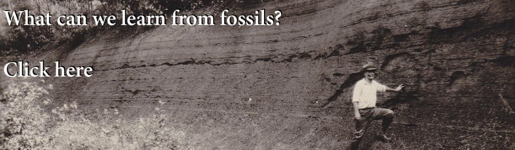 what can we learn from fossils