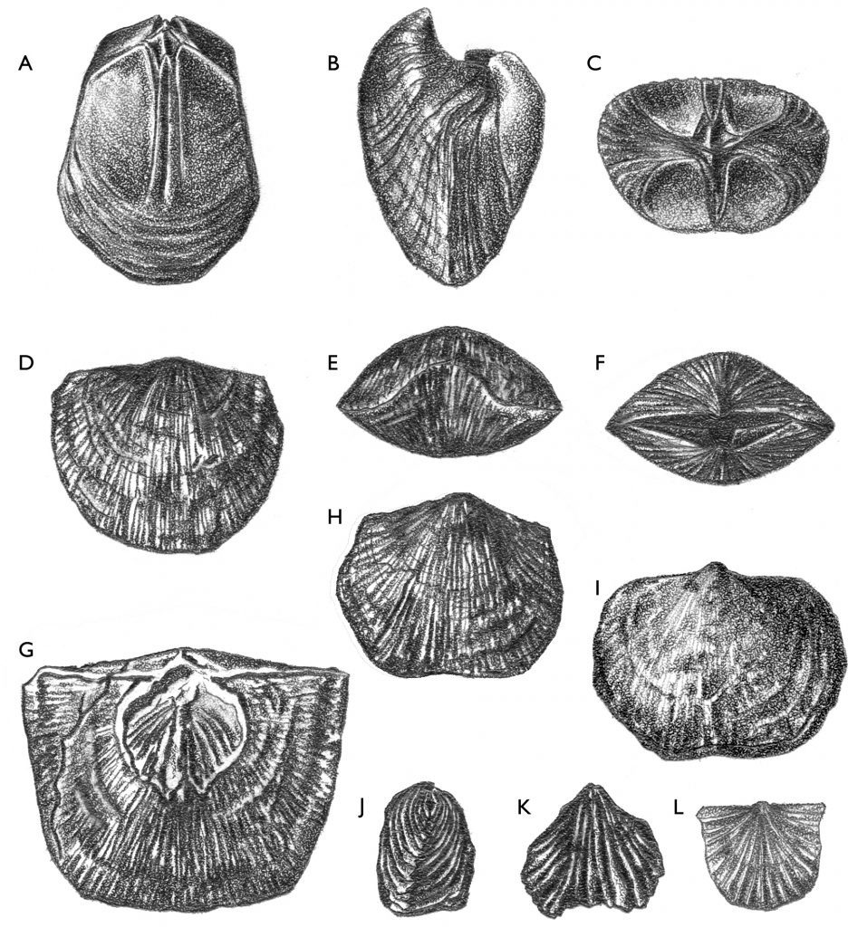 wisconsin geological natural history survey brachiopods
