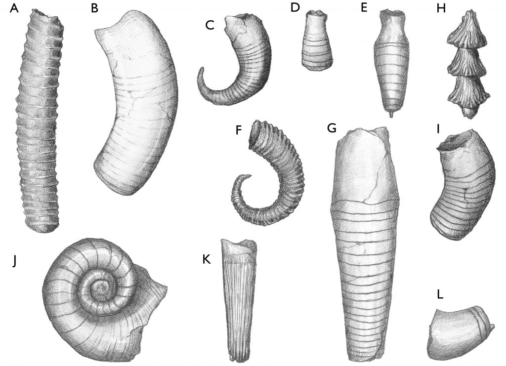 Wisconsin Geological & Natural History Survey » Cephalopod mollusks