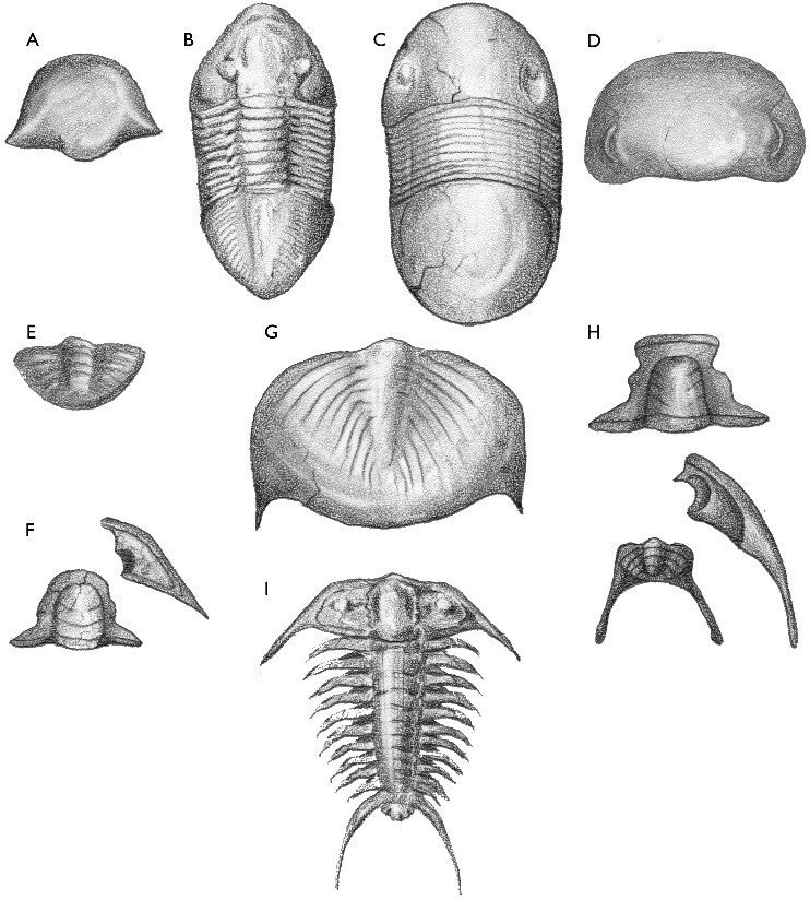 Wisconsin Geological & Natural History Survey » Trilobites