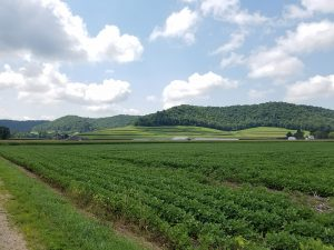 Farmland and tree-covered rolling hills of the Driftless Area in southwest Wisconsin (photo by Eric Carson, WGNHS)