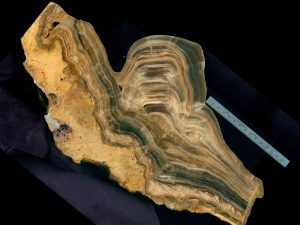 Polished cross-section of a stalagmite from Cave of the Mounds, Wisconsin