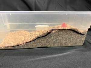Shoebox groundwater model with the cup buried to represent a well